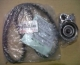 TIMING BELT SET TOYOTA KIJANG INNOVA DIESEL. ORIGINAL